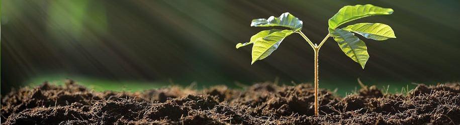 EcoTree : investir dans les forêts de manière écoresponsable 1